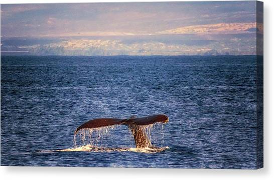 Canvas Print featuring the photograph Whale Tail by Susan Rissi Tregoning