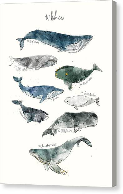 Rights Canvas Print - Whales by Amy Hamilton
