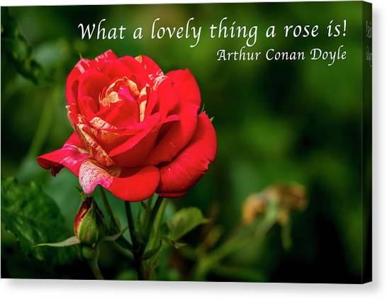 What A Lovely Thing A Rose Is Canvas Print