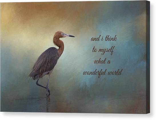 Egrets Canvas Print - What A Wonderful World by Kim Hojnacki