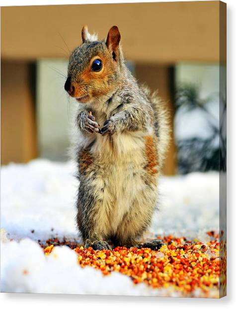 What About Some Acorns Canvas Print
