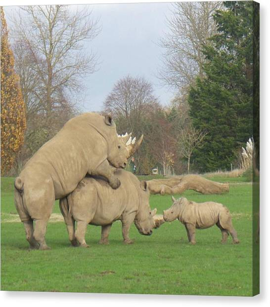 Rhinos Canvas Print - What Are You Up To Mum? #awkward by Katie Greenwood