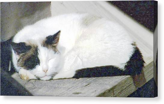 What Do Cats Dream Of #2 Canvas Print