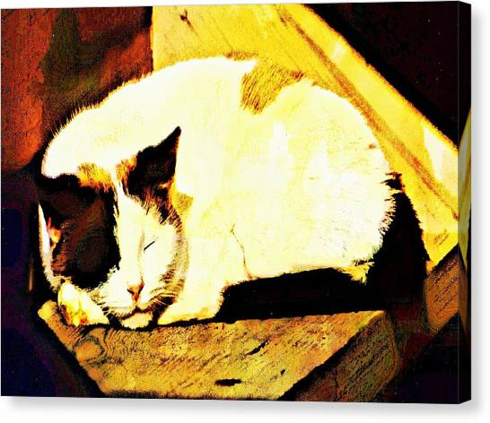 What Do Cats Dream Of Canvas Print