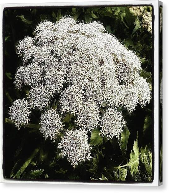 Canvas Print featuring the photograph What Flower Is This? I Think It's by Mr Photojimsf