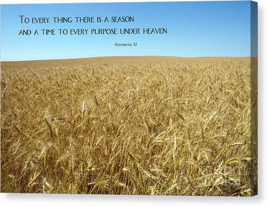 Wheat Field Harvest Season Canvas Print
