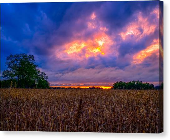 Wheat Field Sunset Canvas Print