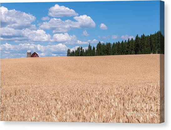 Wheat Fields Canvas Print