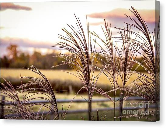 Wheat Sunset Canvas Print by Keith Rousseau