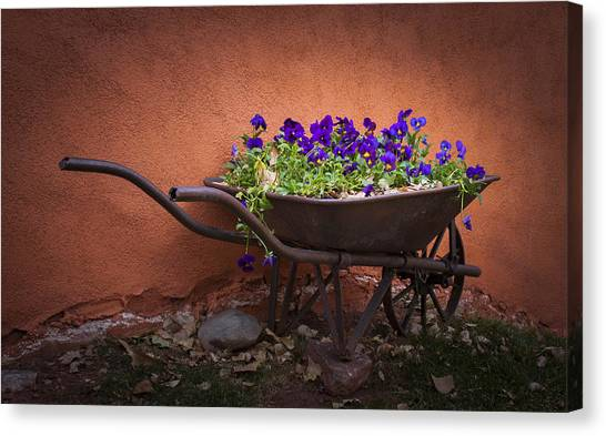 Wheelbarrow Full Of Pansies Canvas Print
