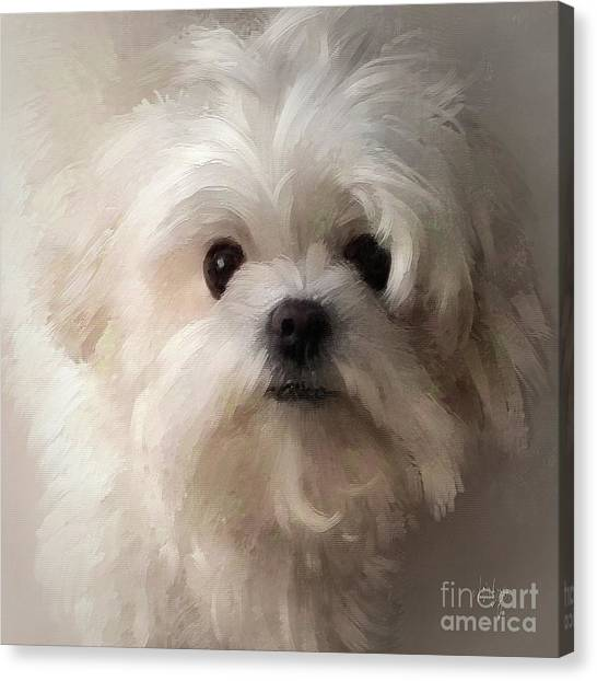 White Maltese Canvas Print - When All Else Fails by Lois Bryan