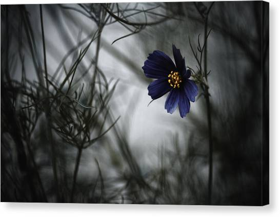 Cosmos Flower Canvas Print - When Cosmos Will Be Blue by Fabien Bravin