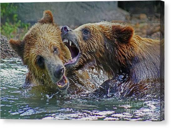 When Grizzlies Play Canvas Print
