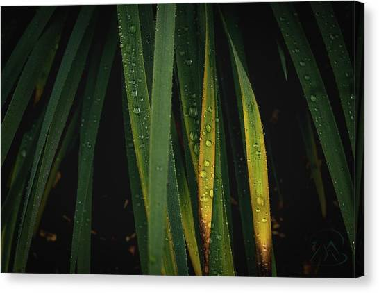 When It Rains Canvas Print
