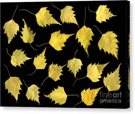 When Leaves Grow Old Canvas Print