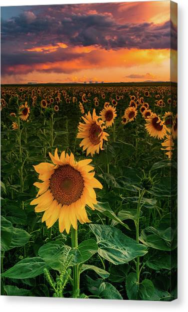 When The Sky Sings Canvas Print