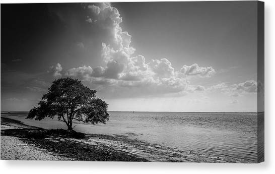 Mangrove Trees Canvas Print - When You Are Alone by Marvin Spates