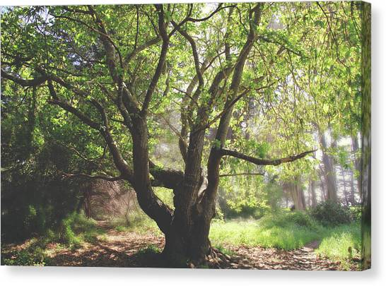 Ca Canvas Print - When You Need Shelter by Laurie Search