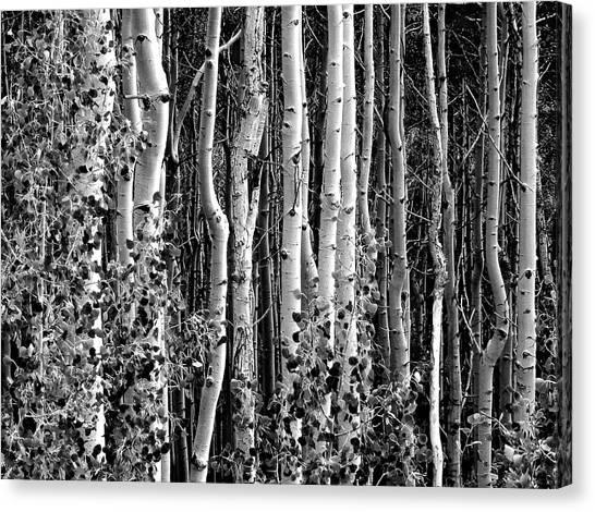Where Canvas Print