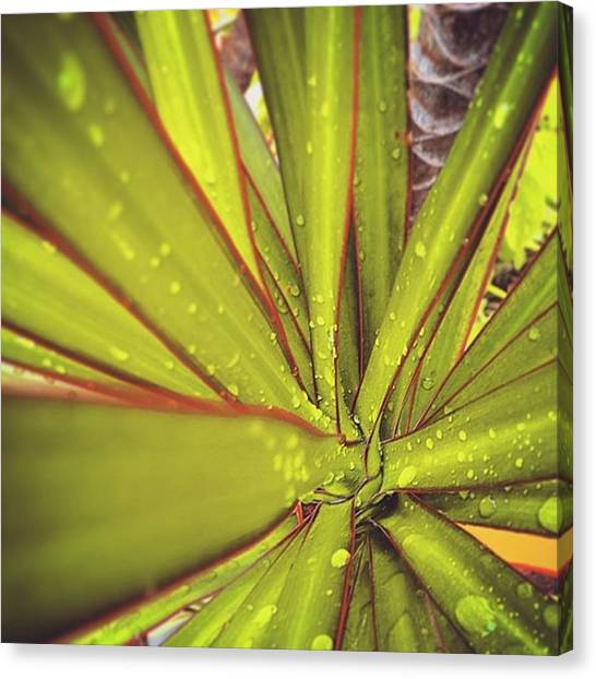 Fibonacci Canvas Print - where There Is Life There Is A by Lean P