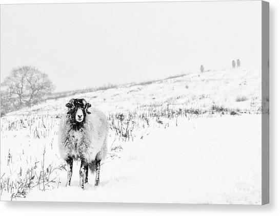 Farm Landscape Canvas Print - Which Way Is South? by Janet Burdon