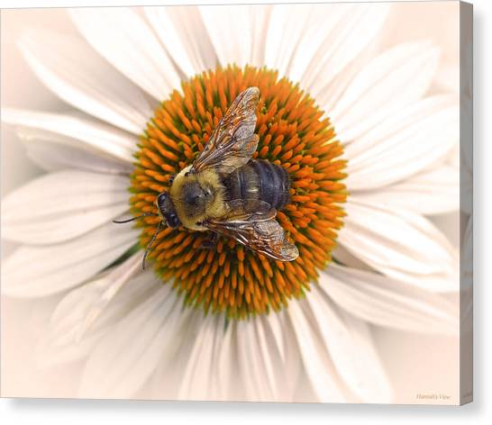 While In Macro  Canvas Print