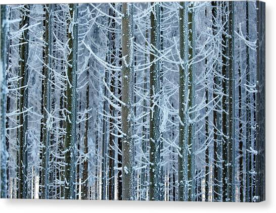 Pine Trees Canvas Print - Whimsical Winters by Roeselien Raimond