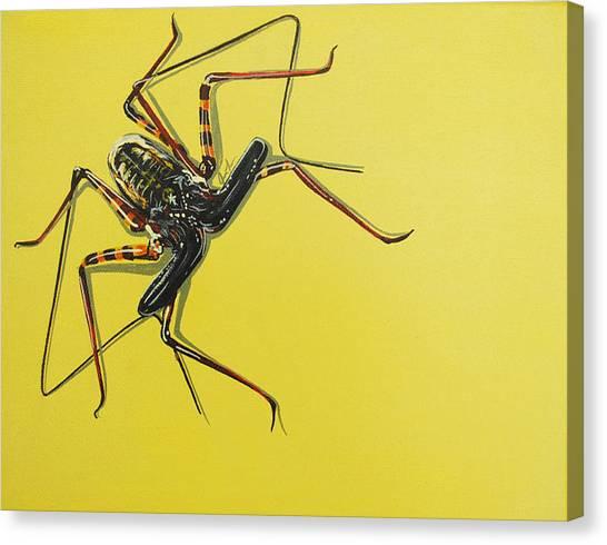 Whip Scorpion Canvas Print