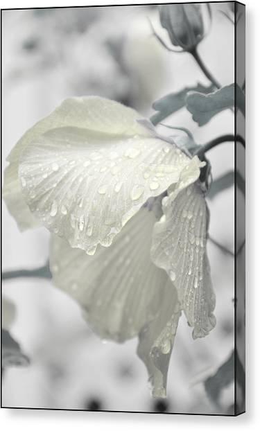 Whisper In Pearlwhite Canvas Print
