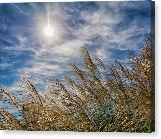 Whispering Grasses Canvas Print