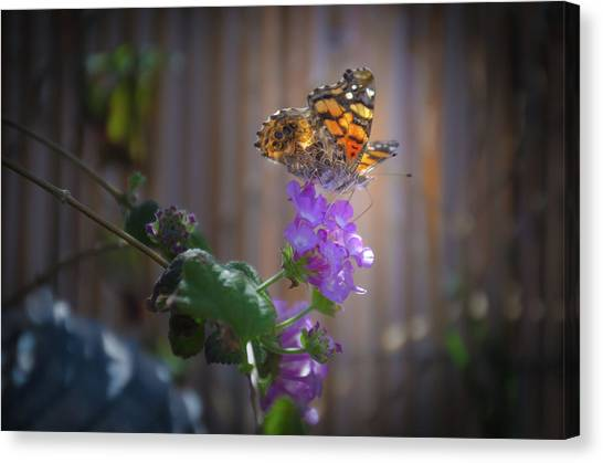 Whispering Wings 2 Canvas Print