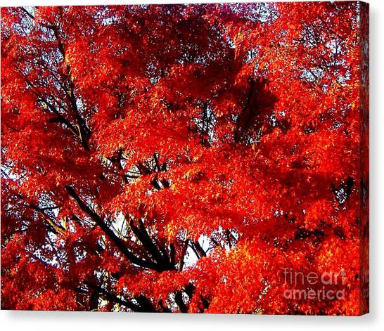 Whispers Of A Japanese Maple Canvas Print by Juliette Carter-MarShall