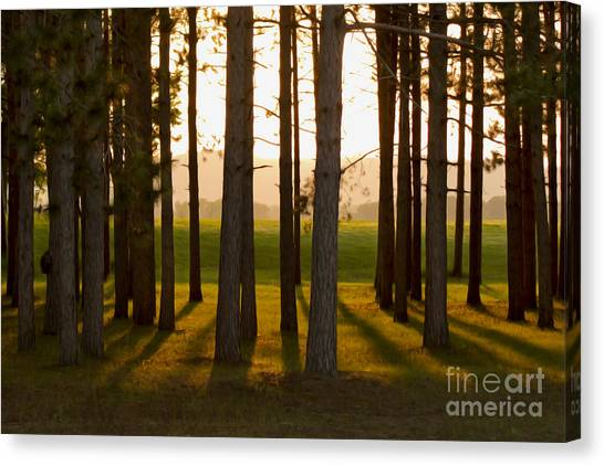 Whispers Of The Trees Canvas Print
