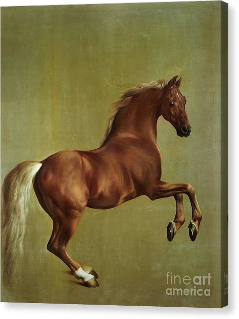 Horses Canvas Print - Whistlejacket by George Stubbs