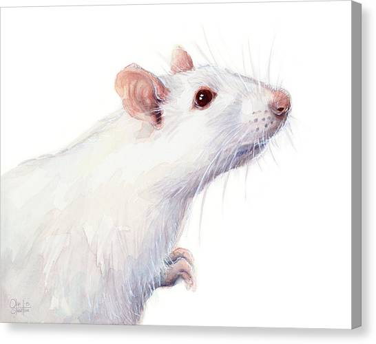 Red Eye Canvas Print - White Albino Rat Watercolor by Olga Shvartsur