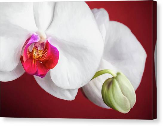 Orchids Canvas Print - White And Red Orchids by Tom Mc Nemar