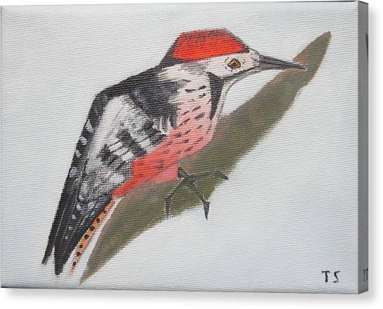 White-backed Woodpecker Canvas Print