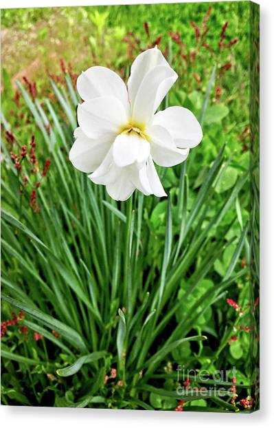Canvas Print featuring the digital art White Beauty by Dee Flouton
