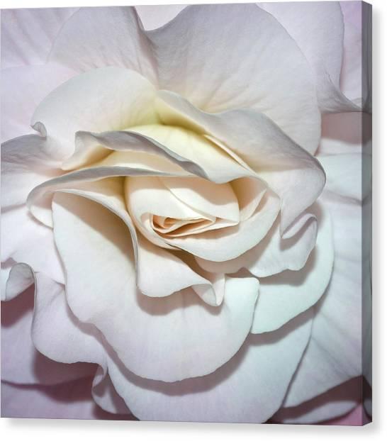 White Begonia Canvas Print