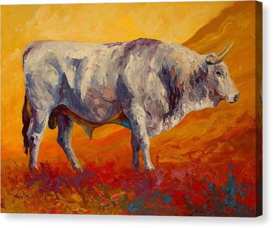 Cow Farms Canvas Print - White Bull by Marion Rose
