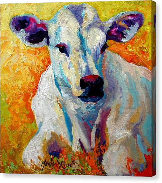Cow Farms Canvas Print - White Calf by Marion Rose