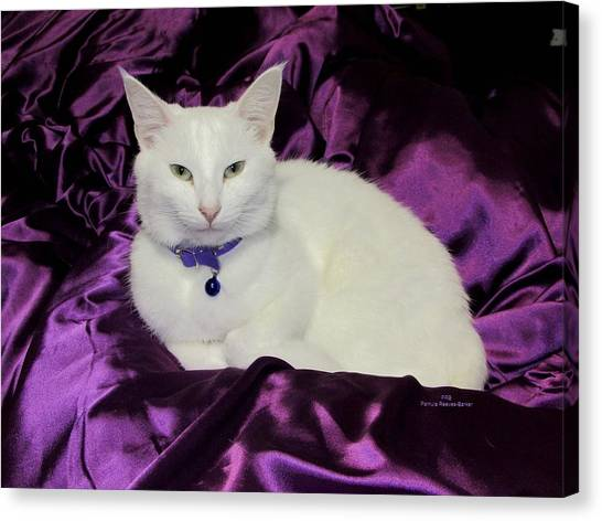 Canvas Print - White Cat by Pamula Reeves-Barker