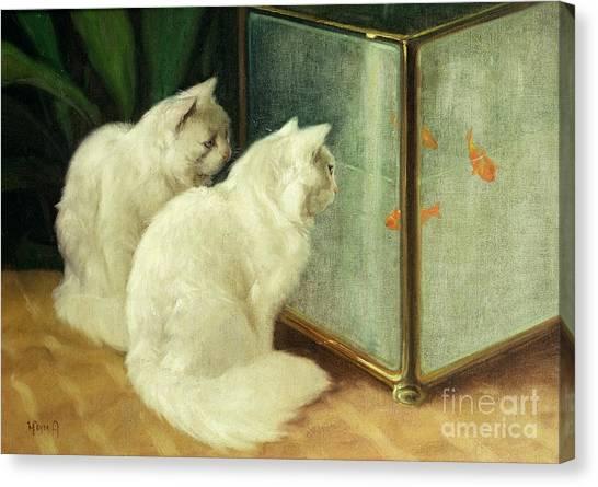 Fish Tanks Canvas Print - White Cats Watching Goldfish by Arthur Heyer