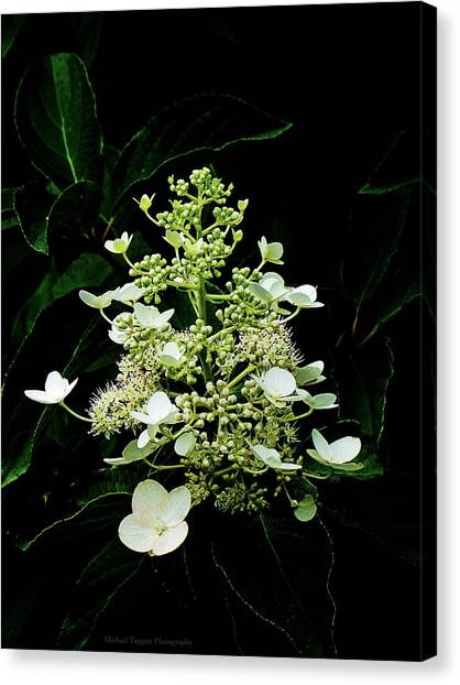 White Chandelier Canvas Print by Michael Taggart II