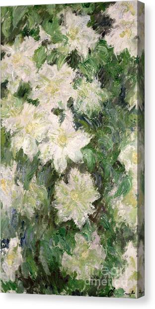 Oil On Canvas Print - White Clematis by Claude Monet