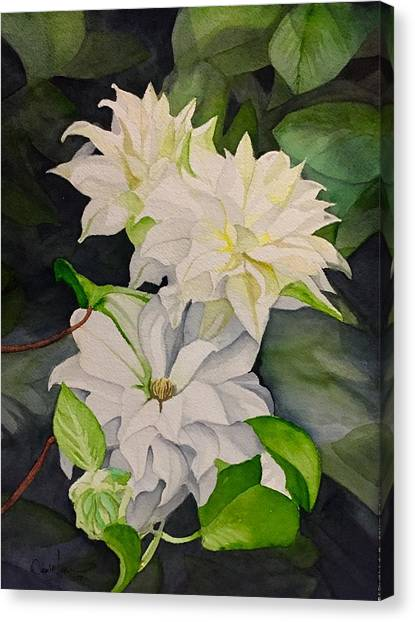 David Hoque Canvas Print - White Clematis by David Hoque