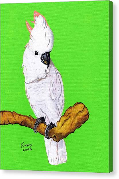 White Cockatoo Canvas Print by Jay Kinney