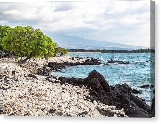 Canvas Print featuring the photograph White Coral Coast by Denise Bird
