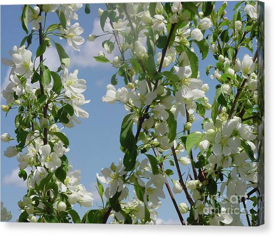 White Crabapple Canvas Print