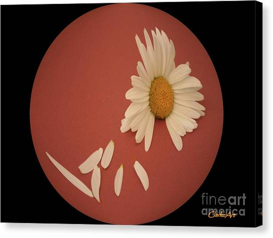 Encapsulated Daisy With Dropping Petals Canvas Print